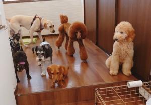 犬ちゃん2_200627_0409