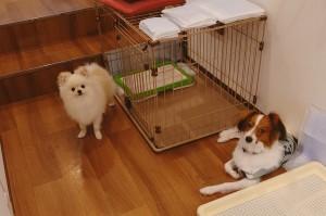 犬ちゃん2_200701_0419