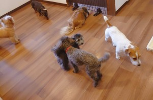犬ちゃん2_200701_0421