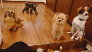 犬ちゃん2_200701_0422