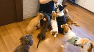 犬ちゃん2_200701_0424