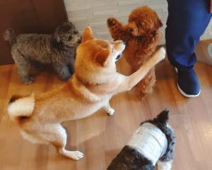 犬ちゃん2_200707_2