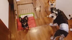 犬ちゃん2_200707_3