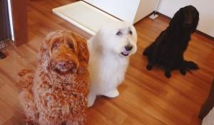 犬ちゃん2_200707_4