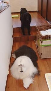 犬ちゃん2_200707_5