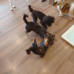犬ちゃん2_200729_1