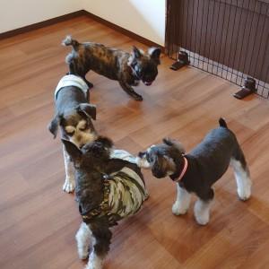 犬ちゃん2_200731