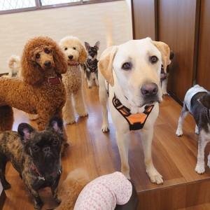 犬ちゃん2_200731_0
