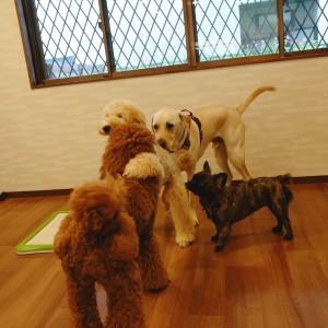 犬ちゃん2_200731_3
