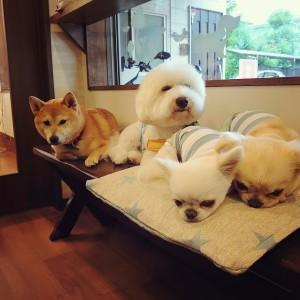 犬ちゃん2_200731_4