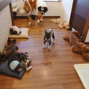 犬ちゃん2_200731_7