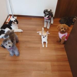 犬ちゃん2_200801