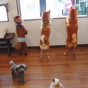 犬ちゃん2_200801_0