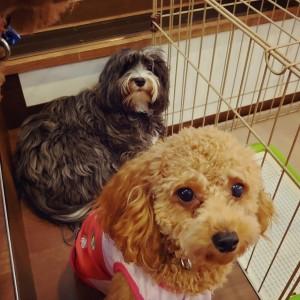 犬ちゃん2_200801_1