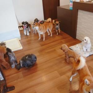 犬ちゃん2_200801_3