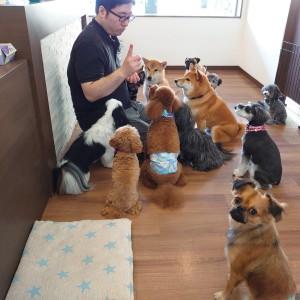 犬ちゃん2_200801_4