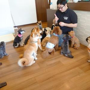 犬ちゃん2_200801_5