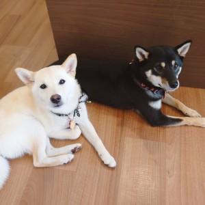 犬ちゃん2_200810_1