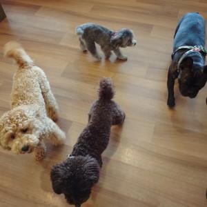 犬ちゃん2_200810_2