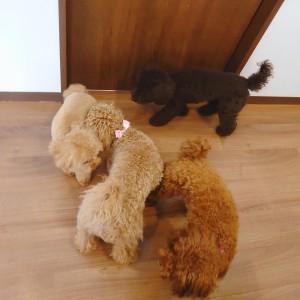 犬ちゃん2_200810_3
