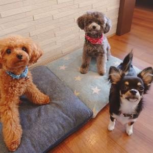 犬ちゃん2_200812
