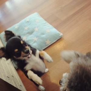 犬ちゃん2_200812_1