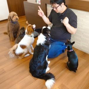 犬ちゃん2_200812_4