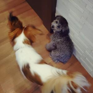犬ちゃん2_200812_7