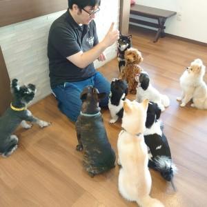犬ちゃん2_200913_0