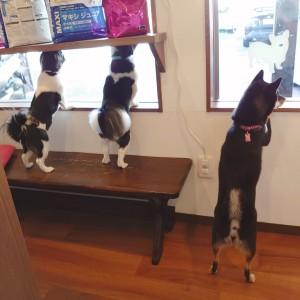 犬ちゃん2_200913_2