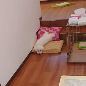 犬ちゃん2_200915_1