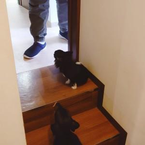 犬ちゃん2_200915_2