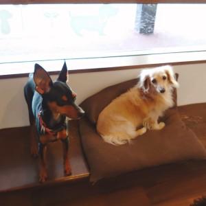 犬ちゃん2_200915_3