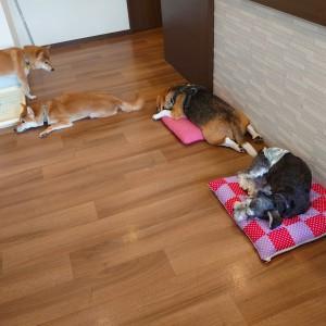 犬ちゃん2_200915_4