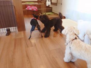 犬ちゃん2_201018_1