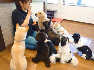 犬ちゃん2_201019_4