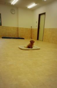 犬ちゃん_181016_0019