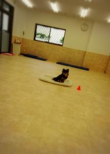 犬ちゃん_181016_0020