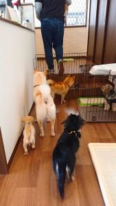 犬ちゃん_190409_0045