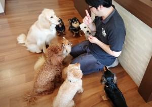 犬ちゃん_190604_0051