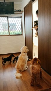 犬ちゃん_190604_0054