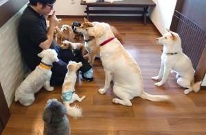 犬ちゃん_191007_0196