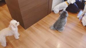 犬ちゃん_191007_0197