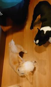 犬ちゃん_191101_0328