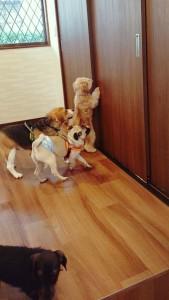 犬ちゃん_191102_0340