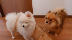 犬ちゃん_191103_0349