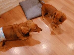 犬ちゃん_191103_0351