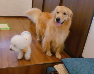 犬ちゃん_191104_0352