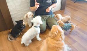 犬ちゃん_191104_0355