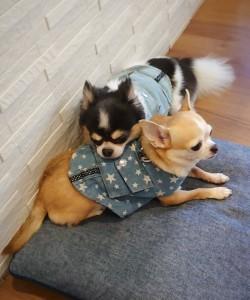 犬ちゃん_191104_0358